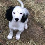 POSITIVE PETS DOG TRAINING & BEHAVIOUR profile image.