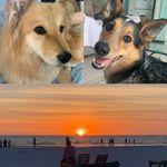 T.L.C Pet Walking & Sitting Services profile image.