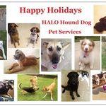 HALO Hound Dog Pet Services profile image.