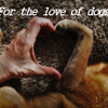 For the love of Dogs profile image