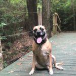 A Better Bond Dog Training & Behavior profile image.