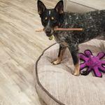 Double D Dog Training profile image.