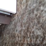 Precision Carpet Cleaning profile image.