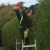 A&B Tree & Gardening services profile image