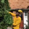 Gold Star Tree and Garden Services profile image