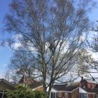 J&L Trees&Property Maintenance