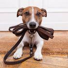 Mr Doggy Walker