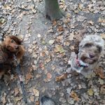 Walks Wags & Wet Noses profile image.