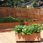 Lifespace Gardens profile image.