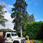 Broderick tree services profile image.