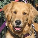 Fido's Day Out Pet Sitting and Dog Walking profile image.