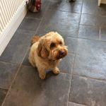 A Short Bark  N Sides profile image.