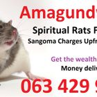 Top best Accurate money spells caster that works in Africa Germany uk usa spiritual traditional healer with Spiritual Rats +27634299958 logo