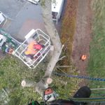 Allwood Tree Care profile image.
