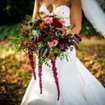 Hayley Pettit Photography & Film profile image.