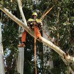 Agri Tree Services profile image.