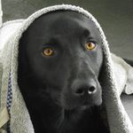 Donadea Doggy Daycare & Training profile image.