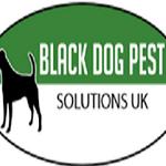 Black Dog Pest Solutions UK profile image.