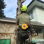 PRIMARY TREE CARE profile image.