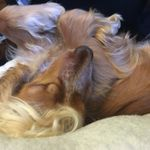 Lily's 4 Paws Dog Training And Canine Courses profile image.