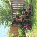 Dogs by Workhorse profile image.