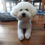 Venture Dogs profile image.