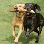 Dog Park and Dog Walking Limerick profile image.