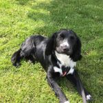 We love pets Brentwood and Grays profile image.