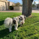 Pawfect Pet & House Sitter LLC profile image.