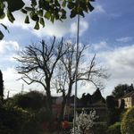 Len's property maintenance m&m Trees &landscapes profile image.