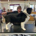 Dog Grooming Trowbridge profile image.