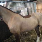 Beth George - Coaching & Sports Horses profile image.