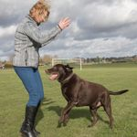 Pets, Homes and Gardens-Slough profile image.