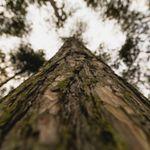 Tree Thyme - Tree Surgeons profile image.