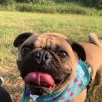 Rebecca's small pet service profile image.