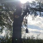 Thomas Mark Arboriculture profile image.