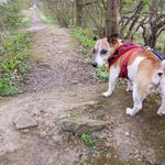 Blue Lead Dog Walking profile image.