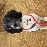 Claydon Canines profile image.
