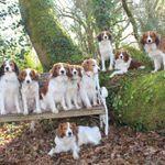 Claire Johnson Dog Training profile image.