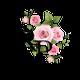 Rosas Photography logo