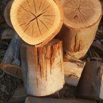 Treefellingdoctor profile image.