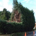 Tree service and steam cleanin profile image.