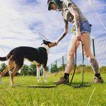Fox N Fables Dog Training profile image.