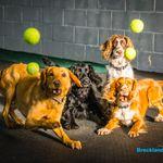 Breckland Dog Training Limited profile image.