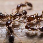 Avid Pest profile image.