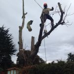 www.grayhawk-treeservices.co.uk profile image.