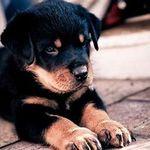 Dog-Trainer profile image.