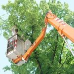 Spank's Tree Service profile image.