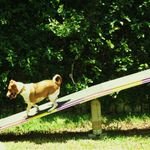 Raleigh NC Dog Training and Behavior Modification | Project Good Dog profile image.