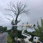 L&S tree service profile image.